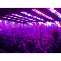 China AC85-265v Hydroponic Plant Grow Light 95 Watt High Power Led Grow Lights wholesale