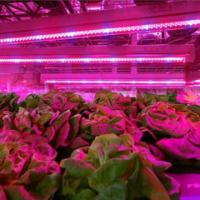 Buy cheap SMD 2835  Led Indoor Garden Lights For Flower / Vegetable , 6-8m Sensor Distance from wholesalers