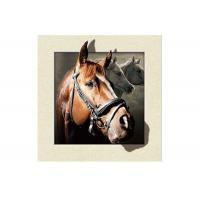Quality Stock Horse Image 5D Pictures Lenticular Photo Printing PET/PP Lenticular for sale