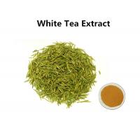 White Tea Leaf Extract Treating Measles, 30% Polyphenols White Tea Extract For Skin