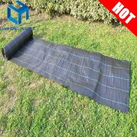 China Black color with green line weed mat/ground cover/slit fence/weed control mat for UK market on sale