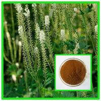 Buy cheap 100% natural black cohosh powder black cohosh extract--Cimcifuga racemosa from wholesalers