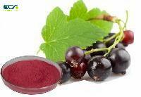 China Anti Oxidation Black Currant Extract Powder , Ribes Nigrum  L Growth Hormone Powder wholesale