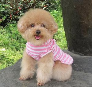 Quality Dog Cat Puppy Clothes Pet Apparel Striped Princess Bowtie Dress for sale