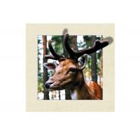 Quality Animal Stock 5D 3D Lenticular Pictures PET Printing Service Deer image for sale