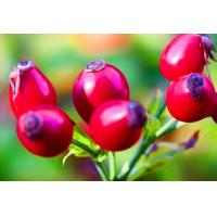 Buy cheap Rose Hips Extract Powder with 5%-20% Rose Polyphenols/Vitamin C 5-17% from wholesalers