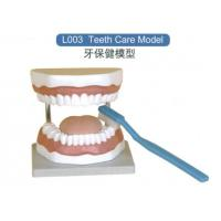 Buy cheap Anatomical Model Teeth Care Model from wholesalers