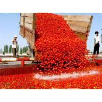 China Tomato paste in drum packing Tomato paste in drum packing Tomatopasteindrumpacking wholesale