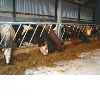 China Cattle Feeding on sale