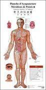 China Acupunctrue Point Wall Chart (French-Chinese) wholesale
