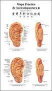 China Auricular Acupunctrue Point Wall Chart (Spanish-Chinese) wholesale
