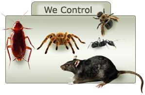 China Pest Control Bangalore - Varna Enterprises, India