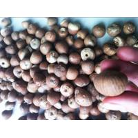 China Nuts & Seeds Dried Betel Nuts Whole & wholesale