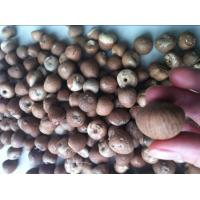 China Dried Betel Nuts Whole & Split wholesale