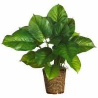 29 Large Leaf Philodendron Silk Plant (Real Touch)
