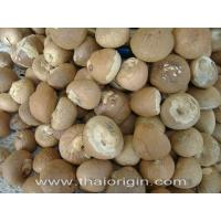 China Dried betel nut wholesale