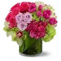 Buy cheap Beautiful Cosmos Deluxe NO.62 delivery flower to china from wholesalers