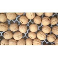 China top Class dried walnut with best quality wholesale
