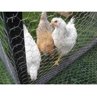 Buy cheap Galvanized Chicken Wire - Rust and Corrosion Resistance from wholesalers
