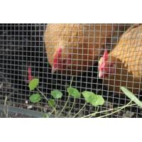 Buy cheap Hardware Cloth Used with Other Type of Poultry Netting from wholesalers