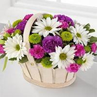 China Mother's Day Healing Grace Standard.No.15 delivery flower to australia sydney wholesale