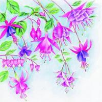 China S308 Fuchsias (for 6 cards) wholesale