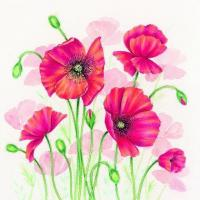 China S306 Poppies (for 6 cards) wholesale