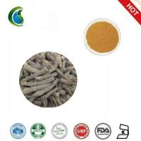 China Common Curculigo Rhizome Extract(curculigo Common Rhizome Extract Cultivated) wholesale