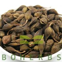 China Forsythiae Fructus Weeping Forsythiae Capsule Forsythia Fruits Lian Qiao wholesale