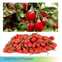 China UV/HPLC GMP 100% natural high quality Wolfberry Powder Extract for sale wholesale