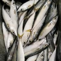 Buy cheap Pacific mackerel from wholesalers