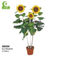 China Haihong Insights Sunflower wholesale