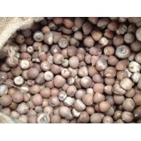 China Nuts Betel nut wholesale