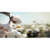 China Indian Raw Cotton wholesale